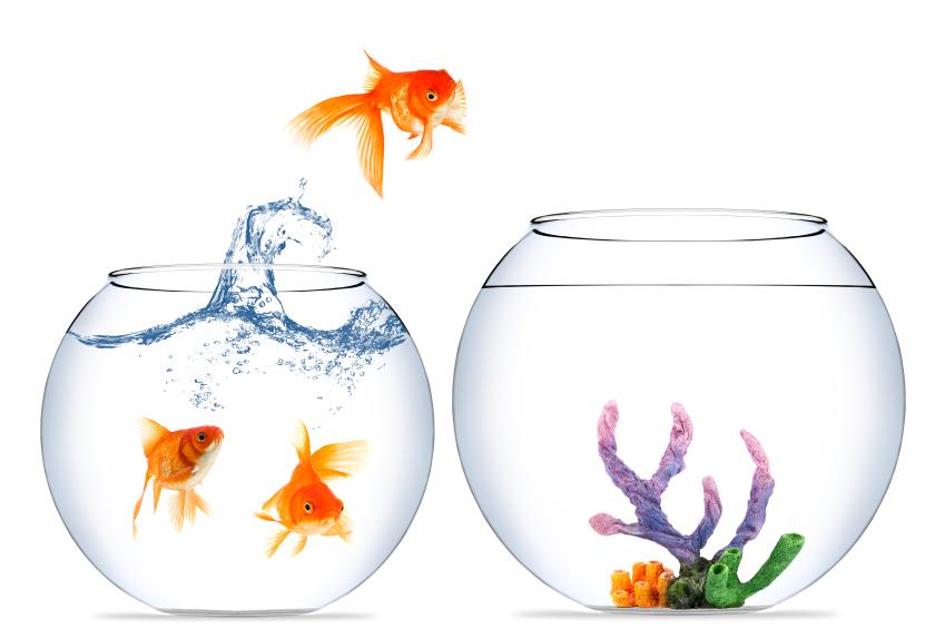 jumping-goldfish